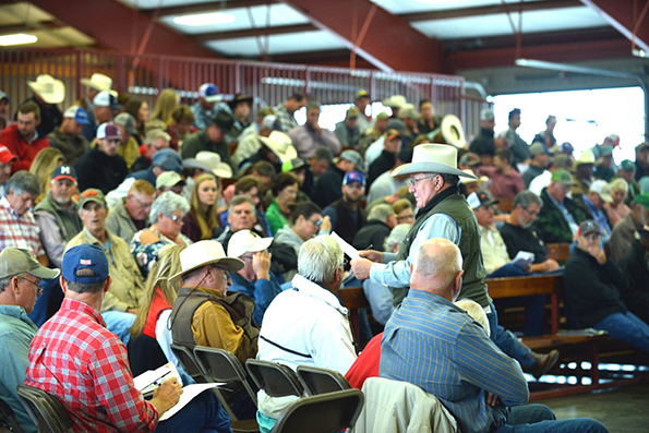 A large crowd from 12 states, Paraguay, South America, and Thailand, Asia, participated in the Town Creek Farm Sale.